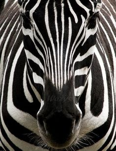 fotografias artisticas de animales - Buscar con Google