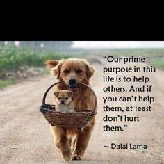 This is such a great thought to consider.Dont hurt anyone try to help them thats our prime purpose.