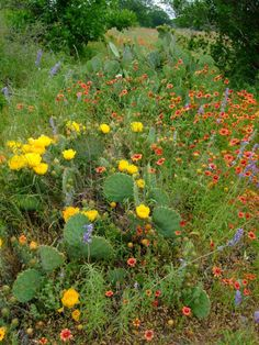 Wildflowers and Cacti at Colorado Bend State Park, TX