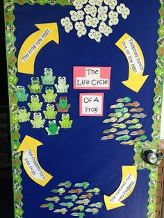 Apples and ABC's: Adventures in Kindergarten: Life cycle of a frog and ADORABLE frog book! Now THIS is a bulletin board I can get behind! EVERY kid helps make EVERY part of the bulletin board! First Grade Science, Kindergarten Science, Teaching Science, Science Room, Teaching Ideas, Frog Crafts, Preschool Crafts, Preschool Ideas, Frog Bulletin Boards