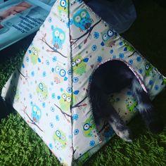 My cat's new tent. Based on this https://smiuchin.wordpress.com/2013/08/16/easy-diy-cat-tent/ #cat #cattent #cathouse #diy #pet