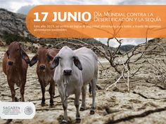 Día mundial contra la desertificación y la sequía. SAGARPA SAGARPAMX