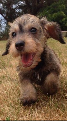 ❤️ Now that's a happy, smiley puppy!