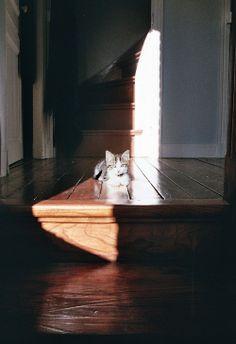 Stair landing kitty