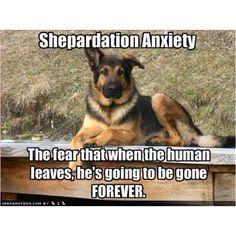 Facebook.com/animalssayitbest