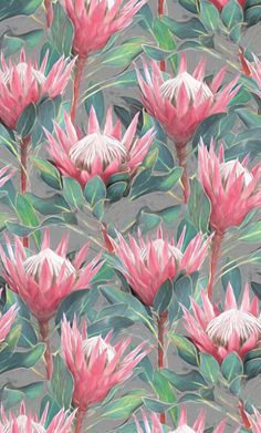 Created for the #CreateArtHistory with State Library Victoria challenge. I chose botanicals. : ) Beautiful tropical King Protea flowers & leaves in shades of soft pastel pink, mint & teal green, off white & mid grey. Textured & smudgy. Protea Art, Protea Flower, Floral Drawing, Australian Birds, Flower Art, Art Flowers, Flower Wallpaper, Botanical Art, Painting Inspiration