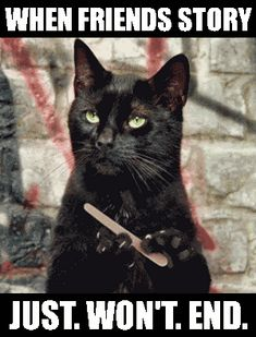 Black Cat Filing Nails : black, filing, nails, Ideas, Cats,, Crazy, Kittens
