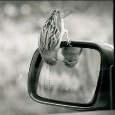 bird looking in mirror