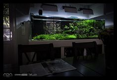 Maintenance on client aquarium   oleh viktorlantos