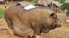 http://ruangtanya.com/hewan-terbesar-di-dunia/
