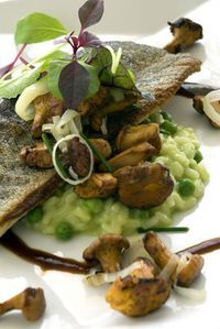 This delicious baked trout recipe combines crispy baked trout with an herby pea risotto, chanterelle mushrooms, and leeks. You can use red mullet, ocean trout, or rainbow trout instead of the brown trout if you like. Any of these fish would be just as good.