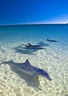 Monkey Mia, Australia... to swim with dolphins is my dream
