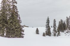 Schneeschuhtour in den Waadtländer Alpen#Chavonnes #Bretaye #snowshoeing #winter #Villars