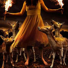 Tom Chambers | Photography | Art Gallery AFK. Burn to shine -animal kingdom