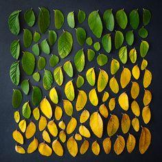tableau avec feuilles de différentes couleurs