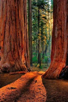 Redwood National Park - best places to visit in the US #TravelDestinationsUsaNationalParks #TravelDestinationsUsaCities #TravelDestinationsUsaAmerica #TravelDestinationsUsaColorado