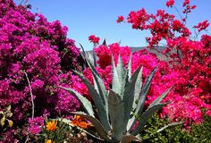 Valle de Guadalupe, Baja California / by Rebeca Anchondo on Flickr