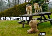 Funny Animal Pictures - View our collection of cute and funny pet videos and pics. New funny animal pictures and videos submitted daily. Cute Funny Animals, Funny Animal Pictures, Funny Cute, Really Funny, Funniest Animals, Crazy Funny, Super Funny, Funny Dog Fails, Funny Dogs