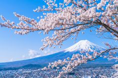 From World-Class Volcanoes to Magnificent Mountains with Stunning Views! Top 7 Interesting Mountains in Japan Thailand Travel, Asia Travel, Japan Travel, Cherry Blossom Japan, Cherry Blossoms, Almond Blossom, Go To Japan, Japan Japan, Japan Trip