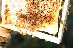 Melbourne City Rooftop Honey