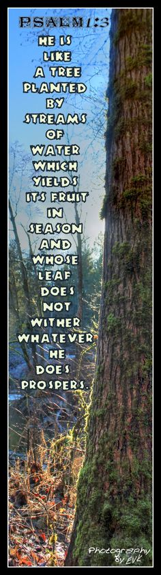 Psalm 1:3 Psalm 3, Youtube Songs, Christ In Me, Fear Of The Lord, Beautiful Disaster, Love People, Life Inspiration, Word Of God, Trees To Plant