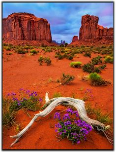 Monument Valley Spring Wildflowers by Jerry Patterson Arches Nationalpark, Yellowstone Nationalpark, North Cascades, Great Smoky Mountains, Beautiful World, Beautiful Places, Monument Valley Utah, Mammoth Cave, Spring Wildflowers