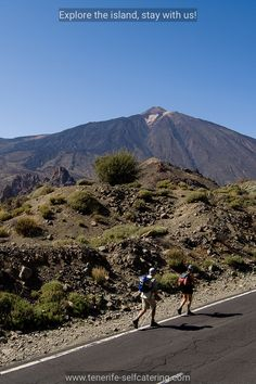 Hikers walking in the Teide National Park, with Mt Teide in the background. Tenerife, Canary Islands.