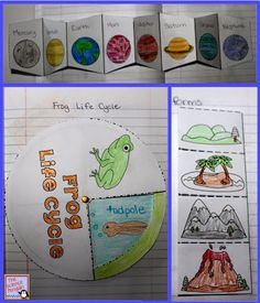 The Science Penguin: Primary Interactive Science Notebook Activities -Frog life cycle -Sorting leaves -Lunar cycle  -Etc.
