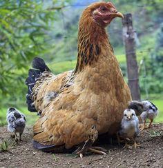 9 fotos de lindos bebês - EscolhaVeg.com.br