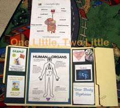 human body lapbook for kindergarten kids-a lot of info! Maybe a lil too much for kindergarteners but still neat