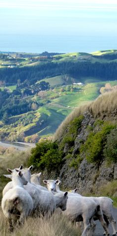 Out and about in Hawke's Bay. With the sheep of course....New Zealand