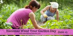 June 13, 2016 – NATIONAL WEED YOUR GARDEN DAY – NATIONAL KITCHEN KLUTZES OF AMERICA DAY – NATIONAL SEWING MACHINE DAY