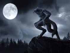 Un lycanthrope plus connu sous le nom de loup-garou est dans les mythologies et les légendes principalement issus de la civilisation européenne, un humain qui a la capacité de se transformer, partiellement ou complètement en loup ou en créature anthropomorphe proche du loup.
