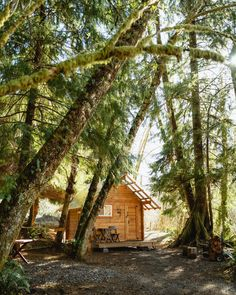 Tucked away in the rainforest (Check out @themandagies to see more Pacfic Northwest photos of this dreamy forest cabin! 🤗) 🌲🏡🌲 Rialto Beach, Hurricane Ridge, Forest Cabin, Cabins In The Woods, Pacific Northwest, North West, Explore, Adventure, Photo And Video