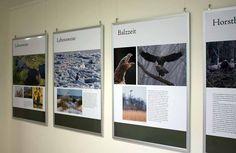 Unterwegs im Müritz Nationalpark | Ausstellung über Adler in der Nationalpark-Information Schwarzenhof (c) Frank Koebsch