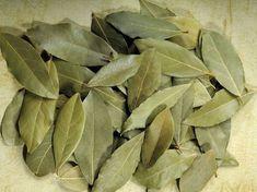 Le foglie di alloro, sono utilizzate da secoli nella medicina alternativa. Considerata una pianta sacra dagli antichi Greci e Romani, simbolo di onore e gloria sul capo dei vincitori alle Olimpiadi…
