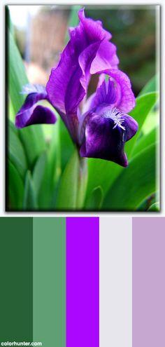 Iris In Spring Color Scheme