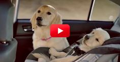 This Subaru Ad Makes Me Want To Start Watching Commercials Again. Hilarious! | The Animal Rescue Site Blog