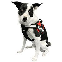 Clean Run: Julius K-9 Chest Pad for Harnesses