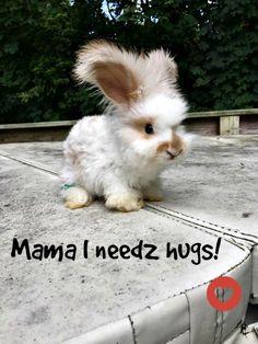 The fluffy cuteness