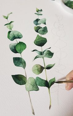 I painted dry flower eucalyptus . Watercolor Leaves, Watercolor Drawing, Watercolor Illustration, Painting & Drawing, Watercolour Tutorials, Watercolor Techniques, Painting Inspiration, Art Inspo, Guache