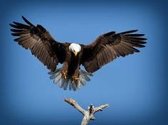 Image result for eagle landing