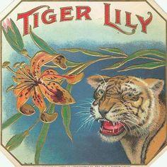 TIGAR LILY VINTAGE CIGAR BOX LABEL.