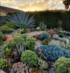 36 Beautiful Cactus Landscaping Ideas For Your Front Yards Decor Succulent Landscaping, Front Yard Landscaping, Succulents Garden, Landscaping Ideas, Landscaping Plants, Succulent Ideas, Front Yard Decor, Trees For Front Yard, Front Yard Plants
