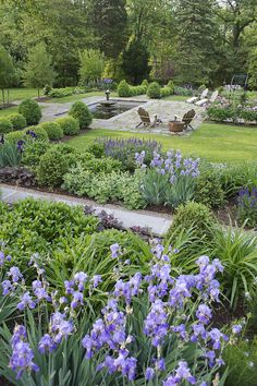 A perfect ratio of paving to plants to lawn. Lee Hill Farm. Design Susan Cohan APLD  the surrounding beds have succession plantings of a wide variety of low-growing, long-flowering and easy-care perennials, featuring bearded Iris, Salvia, Dianthus, Coreopsis, Amsonia and Leucanthemum in the sunnier areas, and more shade-loving Astilbe and Anemone x hybrida in the section sheltered by the enormous Ulmus americana.