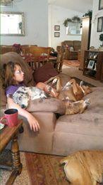 Bruiser and Katy asleep on my granddaughter