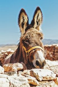 ten surprising things didnt know about donkeys