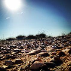 Davis island shells