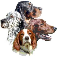 From: Setter Point (FB)  Gordon, Irish, Red & White and English Setters ~ Doggy Art