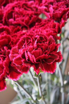 Carnation nobio black heart